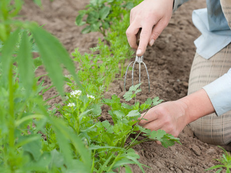 Weed your garden
