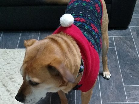 Medium Christmas Sweater - Dog