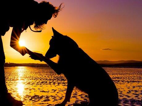 Dog Training/Owner Training