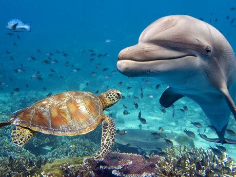 I Will Teach You Marine Biology