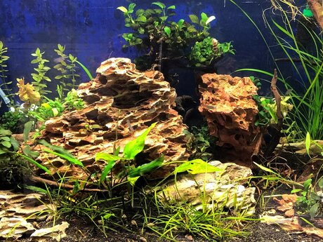 Aquarium Maintenance Consultation