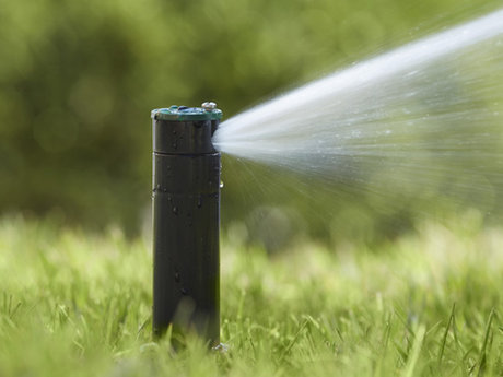 Sprinkler and drip design