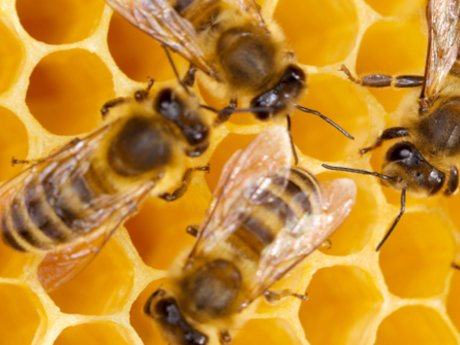 Bee whisper