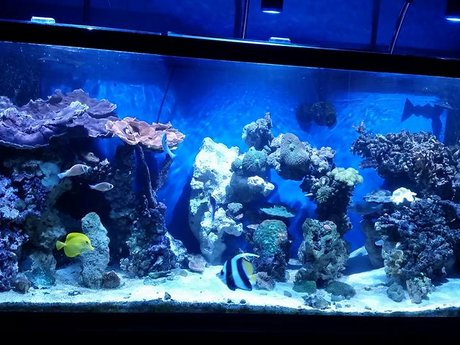 Saltwater Aquarium Help & Advice
