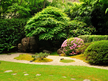 plant suggestions for your garden