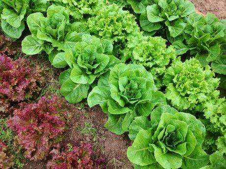 30 Min Garden Coaching