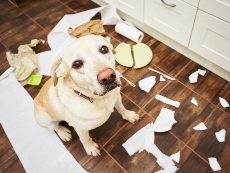 Advanced Dog Behavior Consult