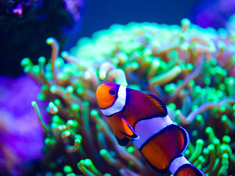 Saltwater aquarium consult