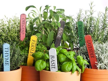 Easy gardening tips for beginners