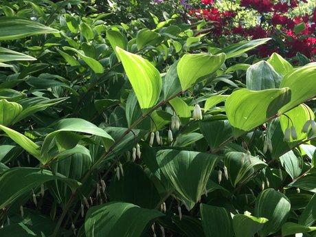 Plant identification consultation