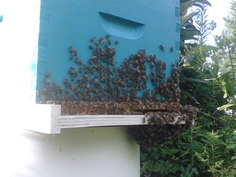 Apprentice beekeeping