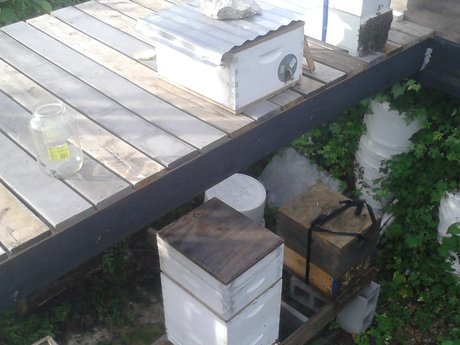Beekeeping Consultation