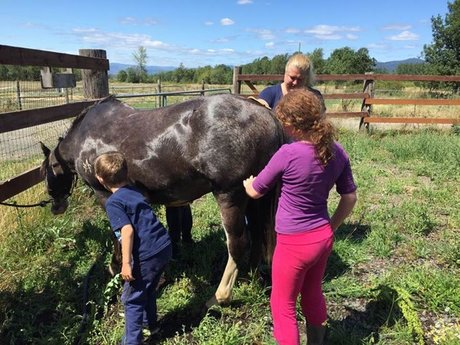 60-90 minutes horse lesson 4 kids