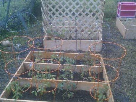 Garden help - setup, compost, more!