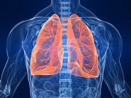 Answer Respiratory Questions