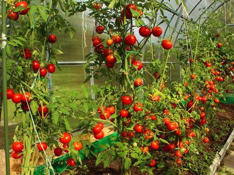 Vegetable Garden Expert