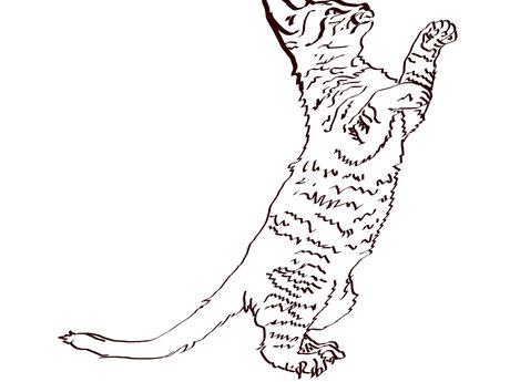 Bad cat doodle