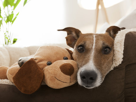 Pet sitting for your furry friend