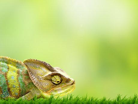 Habitats for exotic pets