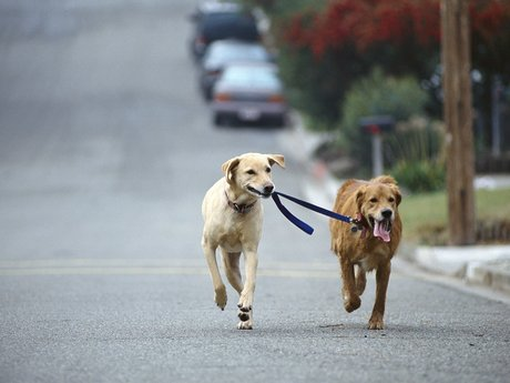 30 minute walk for your pup!