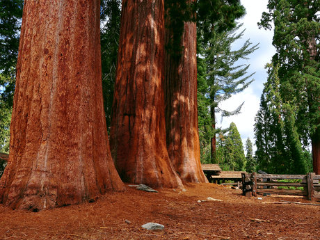 Postcard from the Redwood Forest