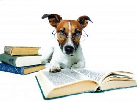Dog Training/ behavior modification