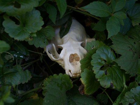 Skull and bone identification