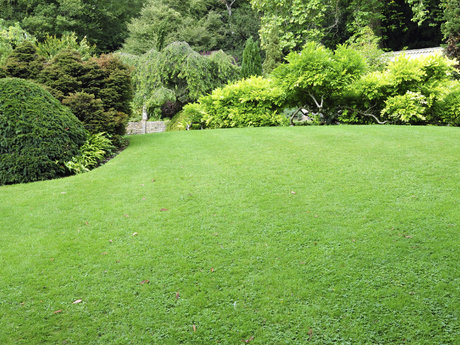 Yard landscaping and maintenance
