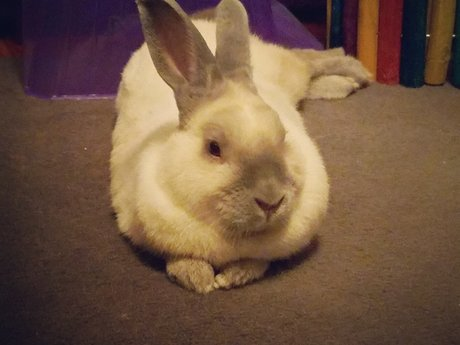Picture of My Bunny!