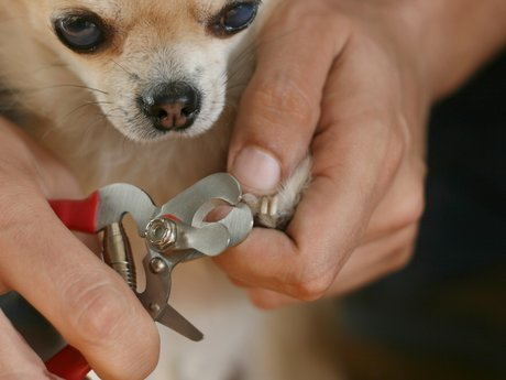 Dog,Cat, or Small Animal Nail Trim