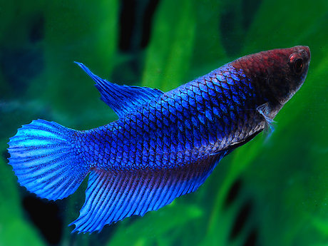 Aquarium Service and Recommedations