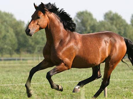 horseback riding lessons/ trail rid