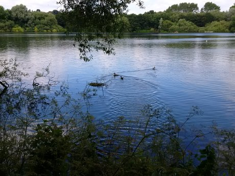 Fish keeping/pond/fishery advice