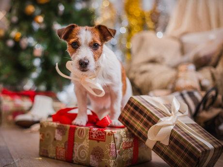 Pet Readiness Consultation