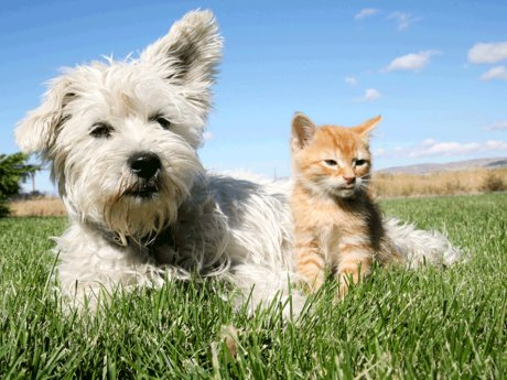 Dog and cat care