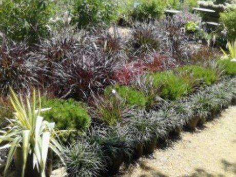 1 hr Garden Design