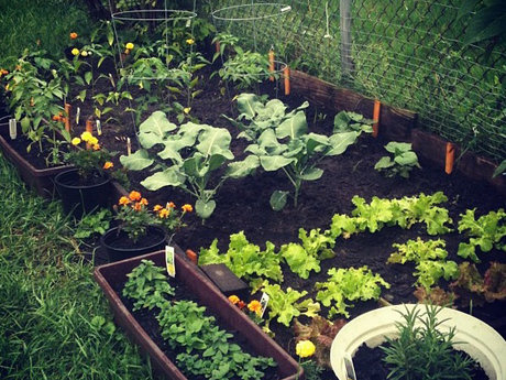 Home Gardening /  Feed Yourself
