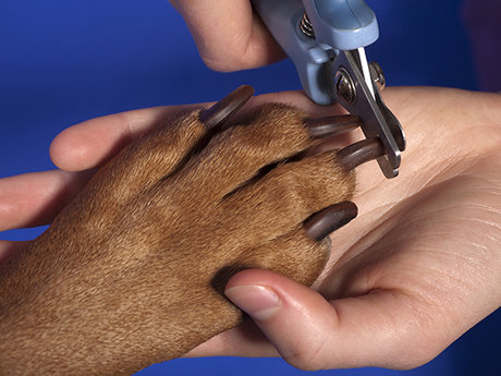 Dog nail trims