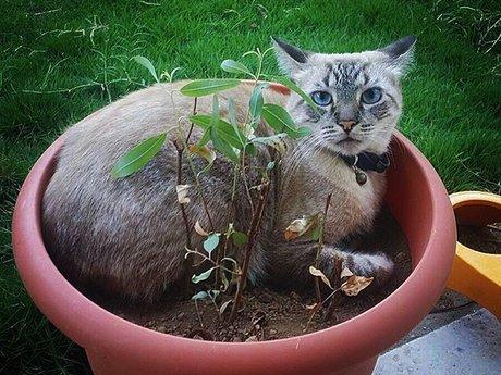 10 minute cat consulting