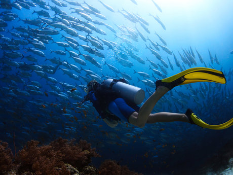 Advice on scuba diving