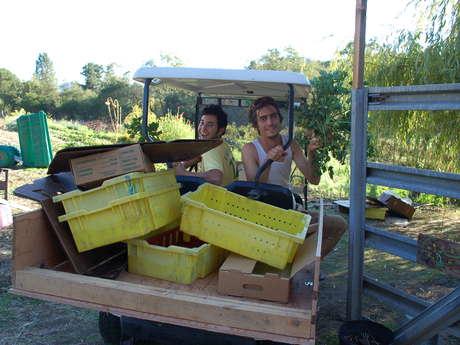 Organic Vegetable Farm Tour (plus veggies)