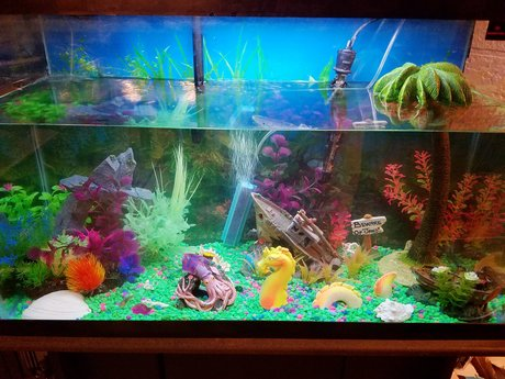 How to spice up your fish tank