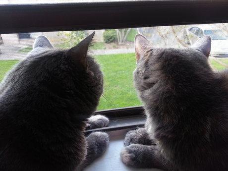 Cat-sitting! Feed, pet, & play