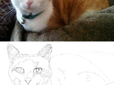 Pet Portrait Drawing