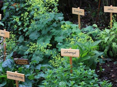 Plant Identification