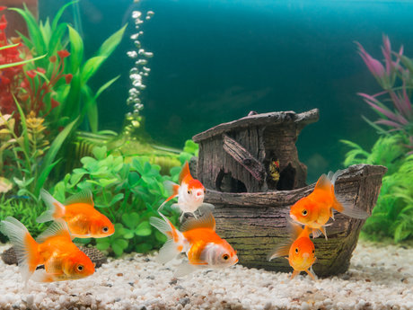 Virtual Aquarium Installation