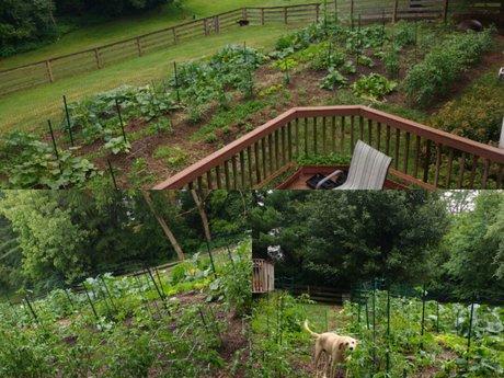 Garden work/consultation