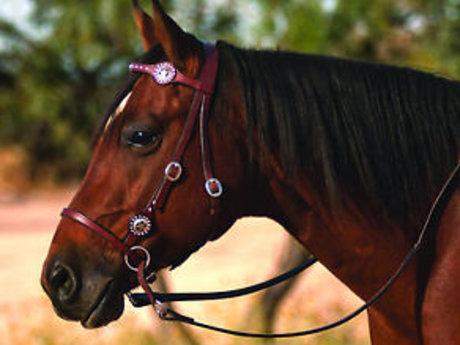 30 minute equine behavior consult