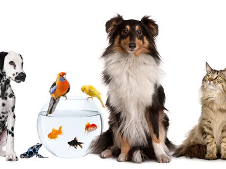 Petsitting, even large animals!