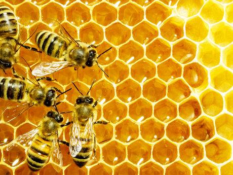 Remove wild bees/ remove hives